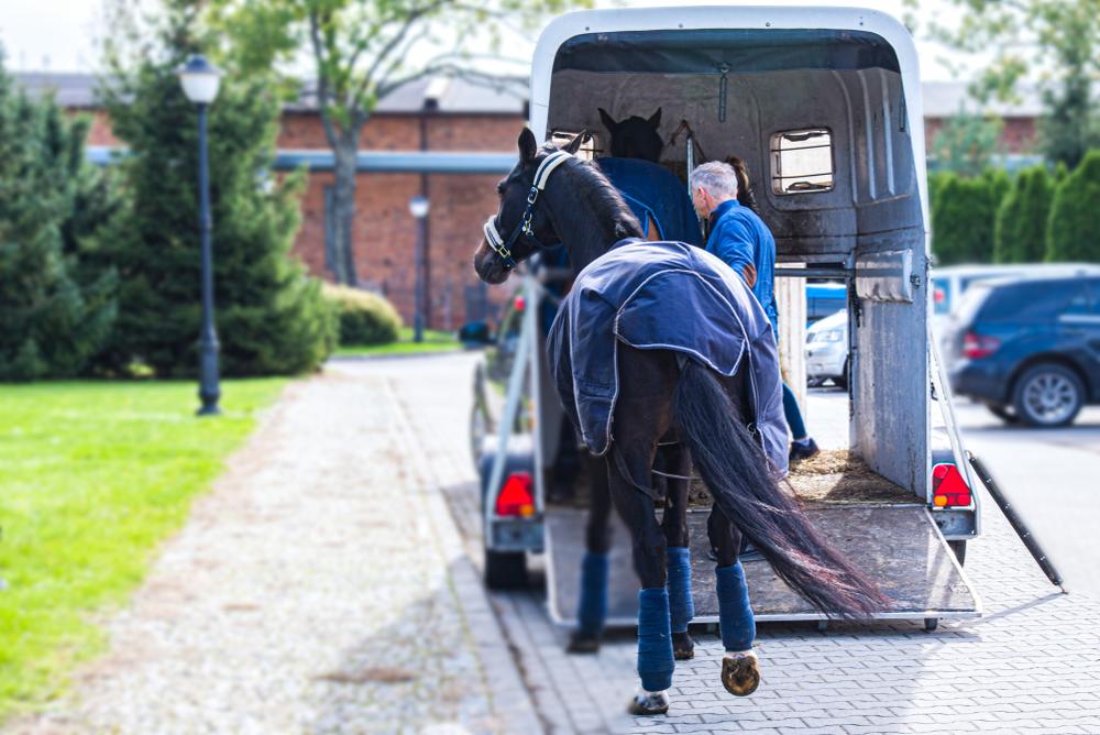 paardentrailer aanschaffen